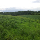 Photo of a strip of native prairie planted next to farmland