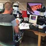 Diagnostician looks at tree sample through a microscope